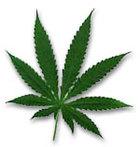 pot-leaf.jpg